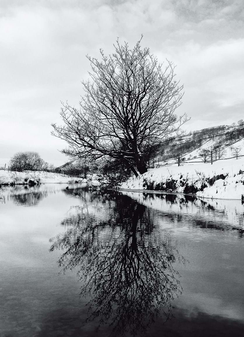 Snow covered tree reflections in small river